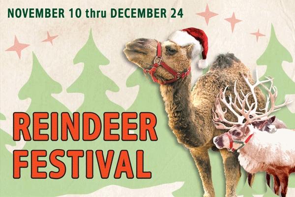 reindeer-festival-swansons.jpg