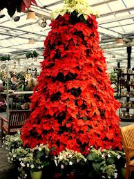 Beautiful Poinsettia Christmas Tree