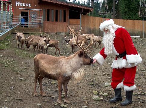 reindeer issaquah santa