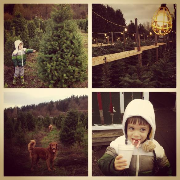McMurtrey's Tree Farm